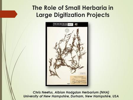 The Role of Small Herbaria in Large Digitization Projects Chris Neefus, Albion Hodgdon Herbarium (NHA) University of New Hampshire, Durham, New Hampshire,