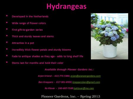 Hydrangeas Developed in the Netherlands Wide range of flower colors First gift-to-garden series Thick and sturdy leaves and stems Attractive in a pot Incredibly.