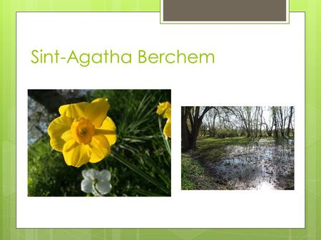 Sint-Agatha Berchem. What did we do? ● We went for a walk in the public gardens, Kattebroek. ● We asked the people questions about their opinion about.