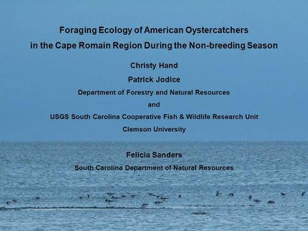 Foraging Ecology of American Oystercatchers in the Cape Romain Region During the Non-breeding Season Christy Hand Patrick Jodice Department of Forestry.