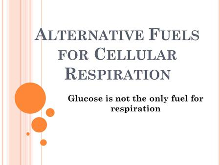 A LTERNATIVE F UELS FOR C ELLULAR R ESPIRATION Glucose is not the only fuel for respiration.