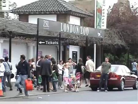 With so much to see and do, a visit to London Zoo is the perfect day out for people of all ages. London Zoo is one of Britain's top attractions and is.