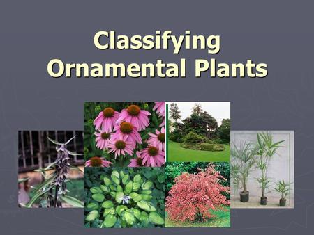 Classifying Ornamental Plants Objectives ► Describe systems used for classifying plants. ► Describe the differences between annuals, biennials, and perennials.