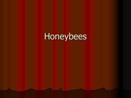 Honeybees. Honeybees Contd…. Honeybee is a social insect that can survive only as a member of a community or colony Honeybee is a social insect that.