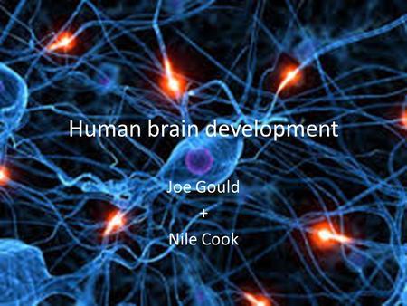 B vitamins for brain function image 2