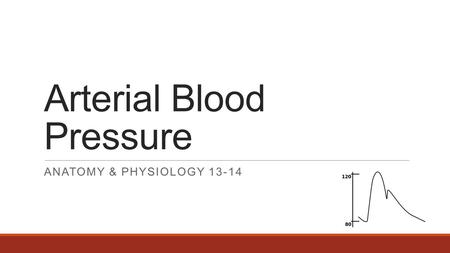 Arterial Blood Pressure ANATOMY & PHYSIOLOGY 13-14.