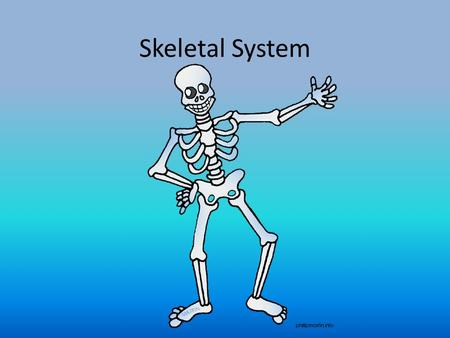 Skeletal System. What's the Purpose? Allows body to move Protects vital organs skull protects brain, ribs protect heart and lungs Produce blood cells.