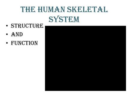 THE HUMAN SKELETAL SYSTEM STRUCTURE AND FUNCTION.
