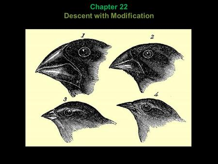 Chapter 22 Descent with Modification. Darwin's context: Chapter 22 Descent with Modification.