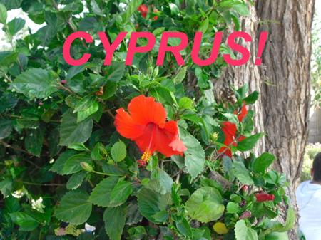 CYPRUS!. C YPRUS IS A LITTLE STATE WITH A LONG HISTORY AND A RICH CULTURE. I T ' S THE THIRD ISLAND IN RANGE IN THE M EDITERRANEAN. I T ' S SITUATED BETWEEN.