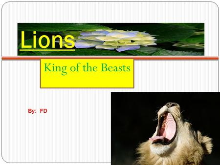 Lions King of the Beasts By: FD Introduction Do you like lions ? If you do, this power point tells every thing you need to know about them.