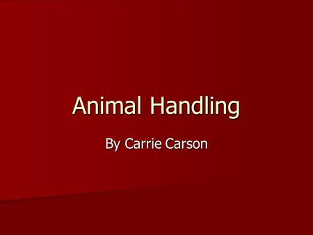 Animal Handling By Carrie Carson. Objectives Locate the blind spot on livestock Locate the blind spot on livestock List likes and dislikes for livestock.