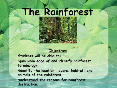 The Rainforest Objectives Students will be able to: gain knowledge of and identify rainforest terminology. identify the location, layers, habitat, and.