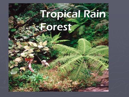 Tropical Rain Forest. Location Temperature ► The temperature in a rain forest rarely gets higher than 93 °F or drops below 68 °F.