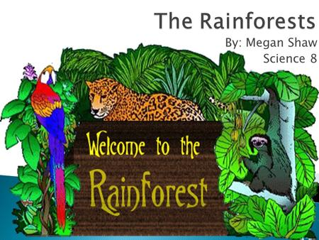 By: Megan Shaw Science 8. Index: Animals Macaw Tree frog Capybara Pictures fun facts Kinds of rainforests How much rain is in a rainforest Rainforest.