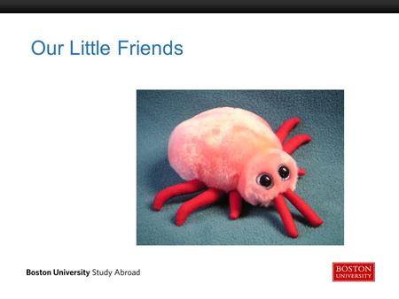 Boston University Slideshow Title Goes Here Our Little Friends.
