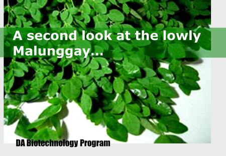 A second look at the lowly Malunggay… DA Biotechnology Program.