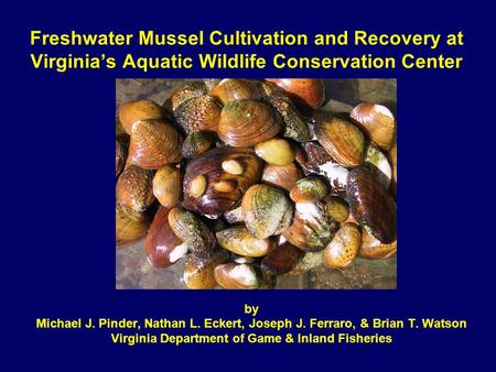 Freshwater Mussel Cultivation and Recovery at Virginia's Aquatic Wildlife Conservation Center by Michael J. Pinder, Nathan L. Eckert, Joseph J. Ferraro,