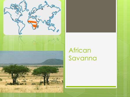 African Savanna. Baobab Tree  Common Name: Baobab  Parts Used: All parts of the tree are used  Research:  The Baobab is found in the savanna of African.