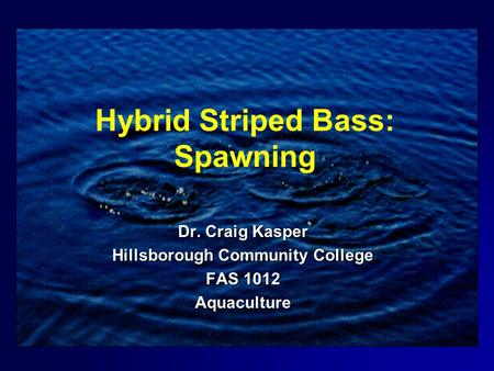 Hybrid Striped Bass: Spawning Dr. Craig Kasper Hillsborough Community College FAS 1012 Aquaculture.
