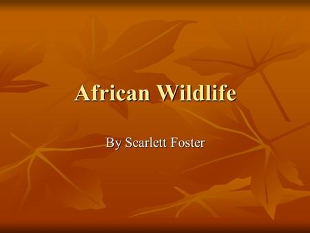 African Wildlife By Scarlett Foster. Lions  Scientific name: Panthera Leo.  Classification: Mammal  Description: A lion has a sandy coloured body.