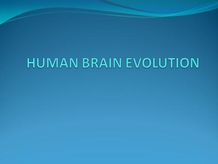 LARGE COMPLEX BRAINS Large complex brains can store and process a lot of information. Early humans interact and encounter with new habitats.