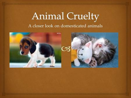 A closer look on domesticated animals.  Question! What exactly is animal cruelty? Animal cruelty can come in 2 forms -Abuse -Neglect  Abuse concerns.