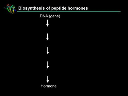 Biosynthesis of peptide hormones DNA (gene) Hormone.