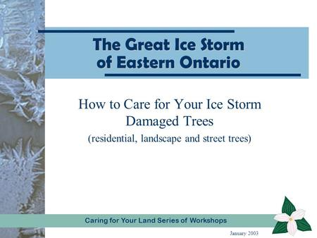 Caring for Your Land Series of WorkshopCaring for Your Land Series of Workshops The Great Ice Storm of Eastern Ontario How to Care for Your Ice Storm Damaged.