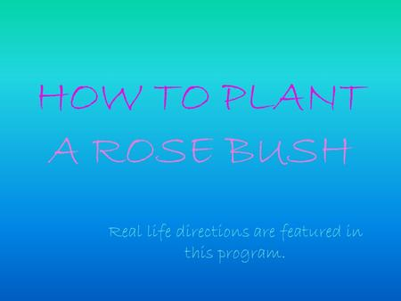 HOW TO PLANT A ROSE BUSH Real life directions are featured in this program.