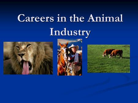 Careers in the Animal Industry. Three steps in choosing an occupation Self -analysis Study an occupation Make a decision.