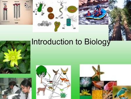 Introduction to Biology. The Golden Rule Treat thy neighbor as thyself. Do unto others as you would have them do unto you As you give, so shall you.