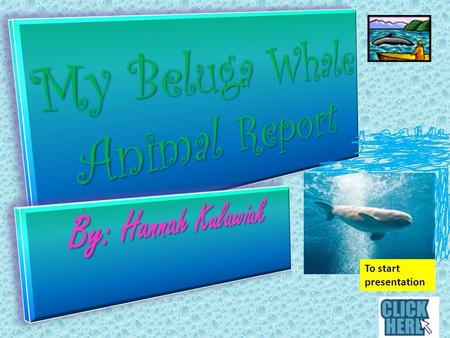 To start presentation Beluga Whale Body Characteristics Body Characteristics Let's learn about the Beluga Whale's body characteristics. Beluga whales.