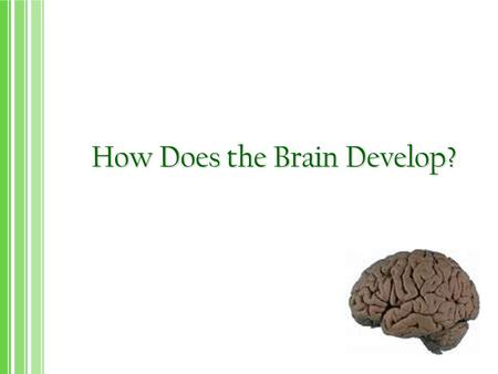How Does the Brain Develop?. Everything we do, feel and say from infancy to the end of life reflect the functioning of our brain How is the brain organized?
