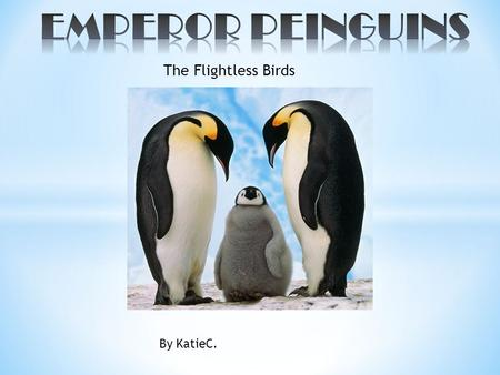 The Flightless Birds By KatieC.. * The scientific name for the emperor penguin is Aptenodytes Forsteri * The penguin is one of the birds who can not fly.