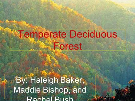 Temperate Deciduous Forest By: Haleigh Baker, Maddie Bishop, and Rachel Bush.