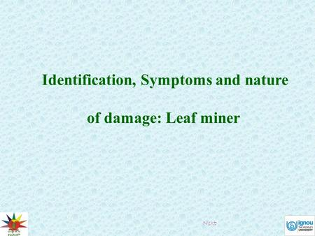 Identification, Symptoms and nature of damage: Leaf miner Next.