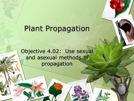 Plant Propagation Objective 4.02: Use sexual and asexual methods of propagation.