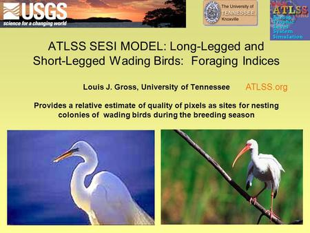 ATLSS SESI MODEL: Long-Legged and Short-Legged Wading Birds: Foraging Indices Louis J. Gross, University of Tennessee Provides a relative estimate of quality.
