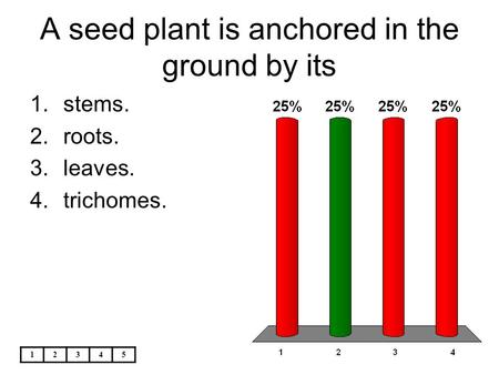 A seed plant is anchored in the ground by its
