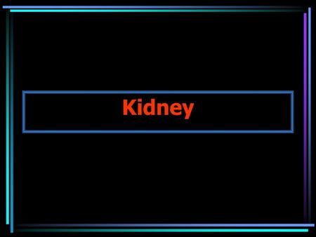 Kidney. Kidneys (urine formation) Lower Urinary Tract Ureters (2) Bladder (1) Urethra (1) (urine collection, storage, excretion) Anatomy of the Urinary.