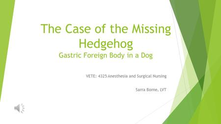 The Case of the Missing Hedgehog Gastric Foreign Body in a Dog VETE: 4325 Anesthesia and Surgical Nursing Sarra Borne, LVT.