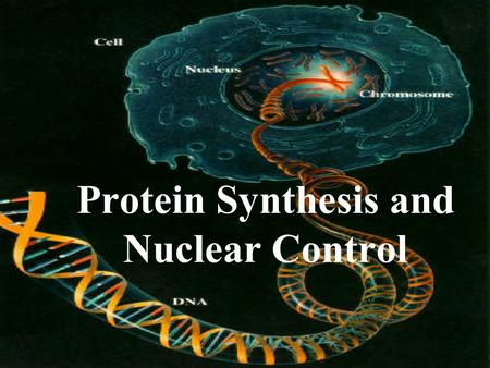 Protein Synthesis and Nuclear Control Do You Know How The Nucleus Controls The Cell?