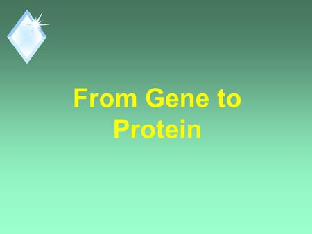 From Gene to Protein. Question? u How does DNA control a cell? u By controlling Protein Synthesis. u Proteins are the link between genotype and phenotype.