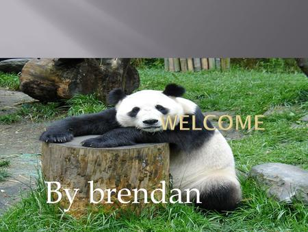By brendan.  There are around 1,600 giant pandas remaining in the wild, now confined to forest areas high in the mountains of south-western China. Their.