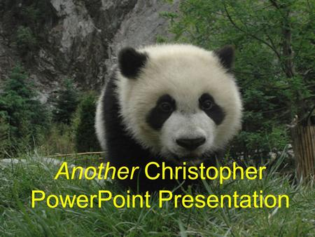 Another Christopher PowerPoint Presentation. Diet (Part I) Pandas in the wild and in protection bases spend up to twelve hours chewing on bamboo, as.