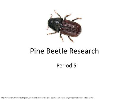 Pine Beetle Research Period 5