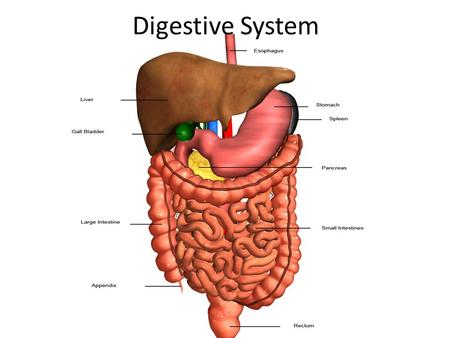 Digestive System. https://www.youtube.com/watch?v=_QYwscA LNng https://www.youtube.com/watch?v=_QYwscA LNng.