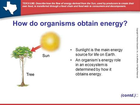 TEKS 5.9B: Describe how the flow of energy derived from the Sun, used by producers to create their own food, is transferred through a food chain and food.