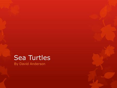 Sea Turtles By David Anderson. General Information  Sea turtles have been considered one of the last dinosaurs left on earth. They have been around since.